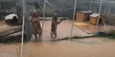 Watch: Heavy flooding in Crete destroys dog shelters