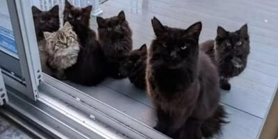 Stray cat and kittens return to woman who helped them to ask for one more favour