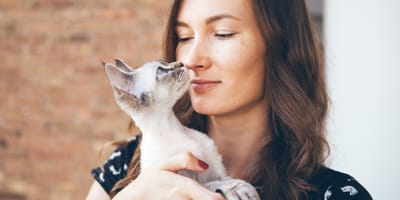 Cat allergy: Which hypoallergenic cat breed should you choose?