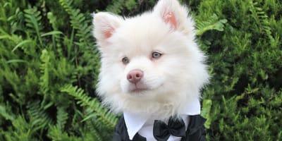 perro-en-boda