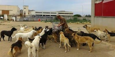 franco rodeado de todos sus perros