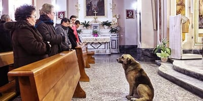 Devastated dog turns up at church everyday for the most heartbreaking reason
