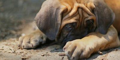 Nichts für die Hundenase: Diese Gerüche mögen Hunde nicht