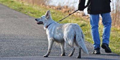Coronavirus: mucho cuidado si tienes perro, las posibilidades de contagio podrían aumentar