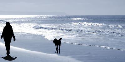 Frau läuft mit Hund am Meer