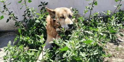 perro mayor abandonado