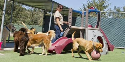 woman surrounded by dogs at doggy daycare