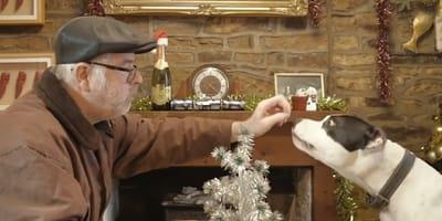 un hombre le da un pedazo de pan a su perro sentado en la mesa