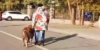 Ve a un hombre paseando a un tigre en plena calle: cuando se acerca descubre algo terrible