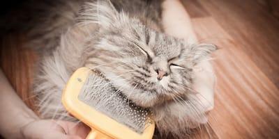Cómo se quita la alergia a los gatos: trucos sencillos e infalibles