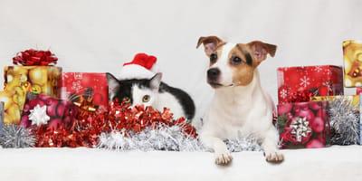 regali-di-natale-cane-e-gatto