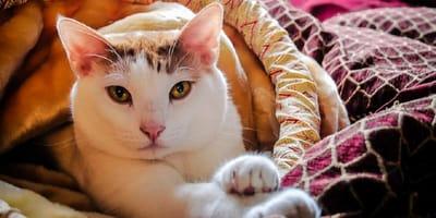 Profesor presenta a su gato en clase: ¡nunca imaginó la reacción que tuvo uno de sus alumnos!