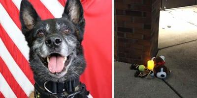 Foto eines Polizeihundes