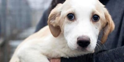 Eurotunnel's new policy could cost the lives of hundreds of rescue animals