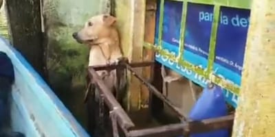 Mexican Navy save dog clinging to the side of building amid giant flood