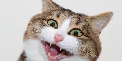 Poznajcie kota, który podbija Internet dzięki swoim niesamowitym minom
