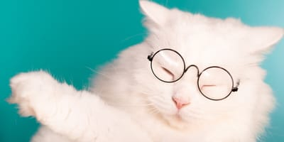 10 incredible facts about cats you may not know (confirmed by science)
