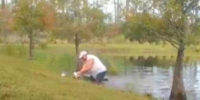 Dog owner wrestling with alligator