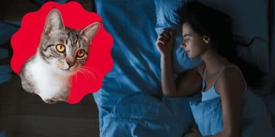 Was bedeutet es, von einer Katze zu träumen?