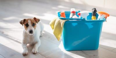 Desinfectantes para perros y gatos: cómo hay que usarlos según los veterinarios