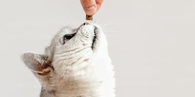 La flora intestinal de los gatos: lo que debes saber para proteger a tu gato