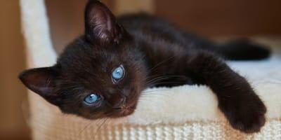 Imię dla czarnego kota – jakie wybrać?