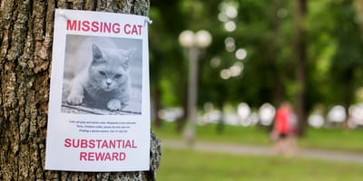 Is your pet missing? Here a some tips to help your find your pet