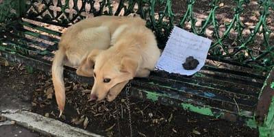perro abandonado banca cdmx
