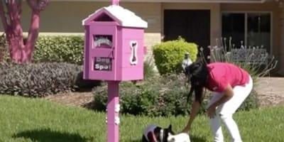 Gute Frau stellt Briefkasten für Hunde auf: Nachbarn reagieren abscheulich!