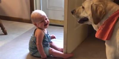 Śmiech tego dziecka na widok labradora roztopi każde serce! (VIDEO)