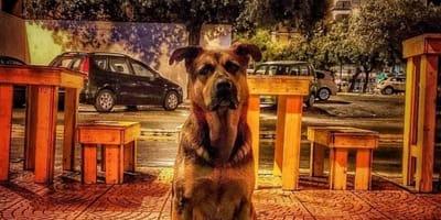 cane-meticcio-per-le-strade