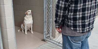 Rescue dog cowers away in fear until he realises who is standing in front of him