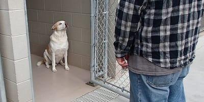 Man visits dog at shelter