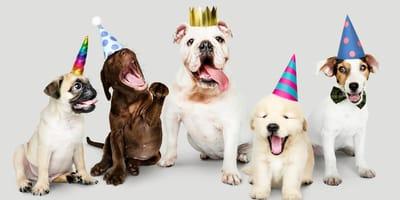 Las razas de perros más populares en España en 2020