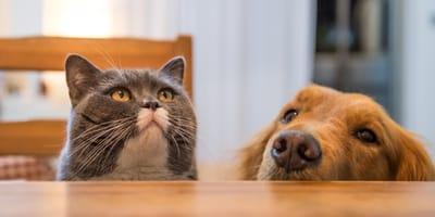 Amare il proprio animale significa assicurarlo!