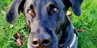Shelter dog cries from dusk until dawn for the most heart-wrenching reason