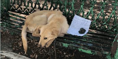 perro-abandonado-coyoacan