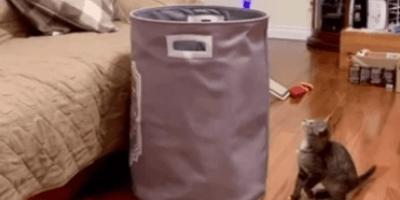 gato jugando cesto ropa sucia
