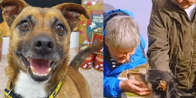 rescue dog standing in front of lily's kitchen pet food and rescue dog being pet by adopters