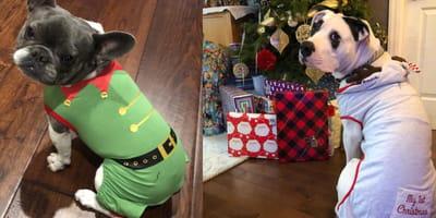 Estos pijamas de Navidad para perros inundarán tu casa con el espíritu navideño que necesitas