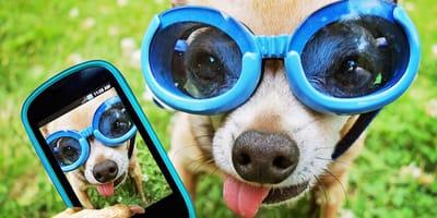 perro con gafas se hace un selfie