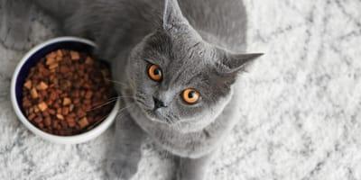 Cáncer de piel en gatos: ¿Cómo detectarlo, tratarlo y qué debo darle de comer a mi gato?