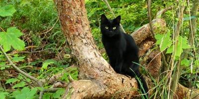 gatito en árbol texcoco