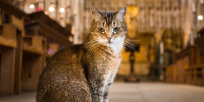 Cat in church