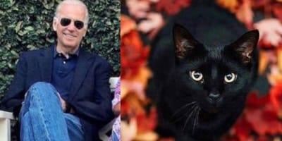 Joe Biden and black cat