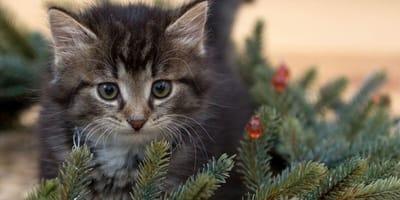 Kitten by Christmas tree