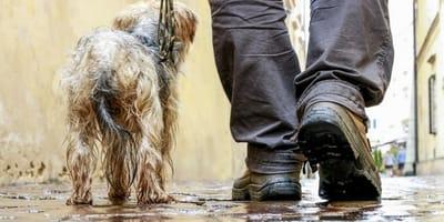 Mi perro no quiere salir cuando llueve: ¿qué hacer?