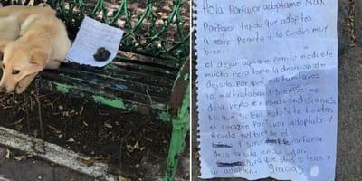 cane triste abbandonato su panchina con una lettera