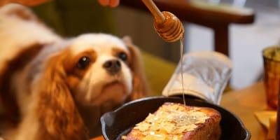 Si può dare il miele ai cani o fa male?