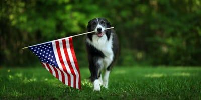 Amerikanische Hundenamen: Wunderschöne Ideen aus den USA